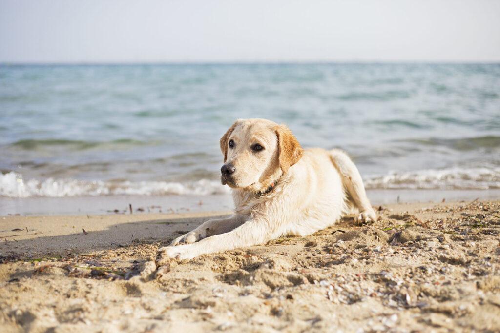 pet-friendly beaches