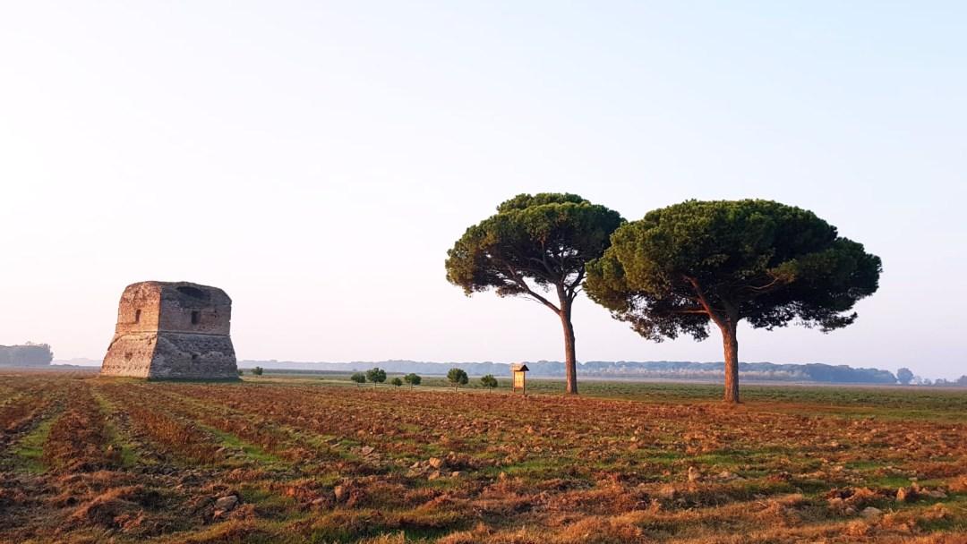 Alba alla Torraccia, Ravenna