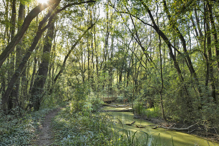 L'oasi di Punte Alberete (Ravenna)