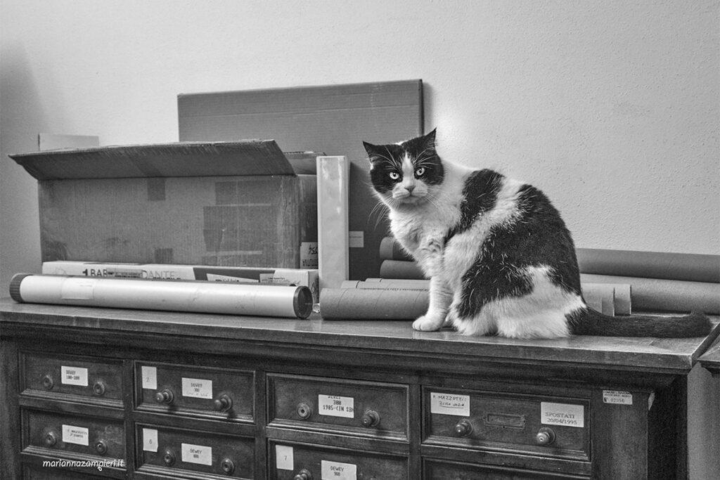 I gatti della Biblioteca Classense (Ravenna)