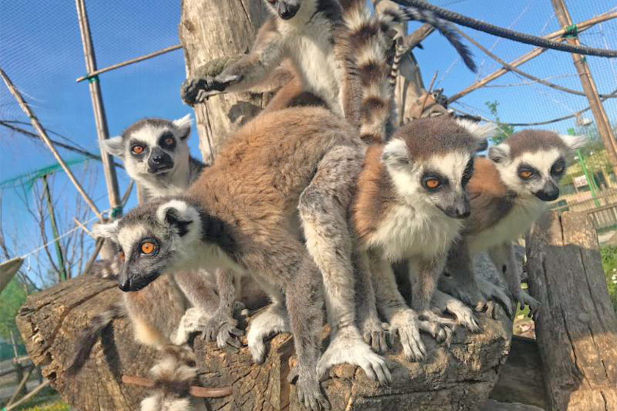 Safari Ravenna - Parco Zoologico